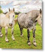 Percherons Horses Metal Print