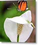 Perching Butterfly Metal Print