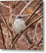 Perching On A Winter's Day  Metal Print