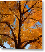 Perfect Autumn Day With Blue Skies Metal Print