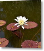 Perfect Lily  Metal Print