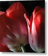 Perfect Pair Metal Print