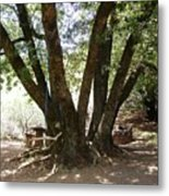 Perfect Picnic Tree Metal Print