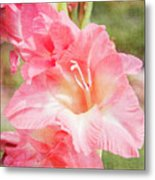 Perfect Pink Canna Lily Metal Print