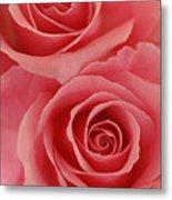 Perfect Pink Roses Metal Print