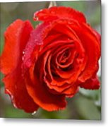 Perfect Red Rose Metal Print