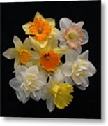 Perfect Ring Of Daffodils Metal Print