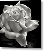 Perfect Rose In Black And White Metal Print