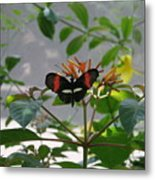 Perfect Set - Butterfly Metal Print