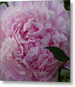 Perfection In Pink Metal Print