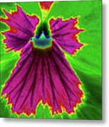 Perfectly Pansy 04 - Photopower Metal Print