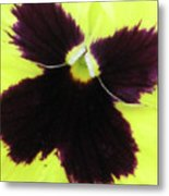 Perfectly Pansy 05 Metal Print