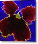 Perfectly Pansy 05 - Photopower Metal Print