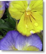Perfectly Pansy 11 Metal Print
