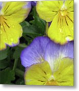Perfectly Pansy 13 Metal Print