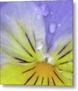 Perfectly Pansy 16 Metal Print