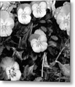 Perfectly Pansy 18 - Bw - Water Paper Metal Print