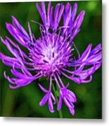 Perfectly Purple Metal Print