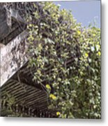 Pergola And Vines Metal Print