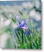 Periwinkle Iris Metal Print