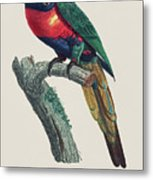 Perruche A Tete Bleue, Male / Rainbow Lorikeet, Male - Restored 19th Cent. Illustration By Barraband Metal Print