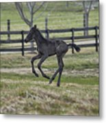 Perry's Colt Running Metal Print