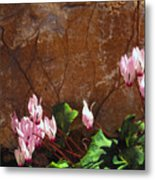 Persian Cyclamen Metal Print