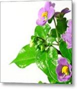 Persian Violets Metal Print