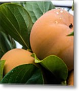 Persimmons Ready For Harvest Metal Print
