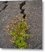 Persistent Flora Metal Print