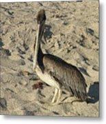 Peruvian Pelican Standing On A Sandy Beach Metal Print