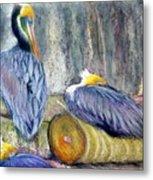 Peruvian Pelicans Three Pastel Metal Print