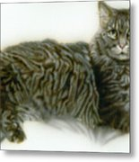 Pet Portrait - Buddy Metal Print
