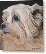 Pet Portrait Painting Commission Cairn Terrier Metal Print