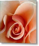 Petal Of Rose Metal Print