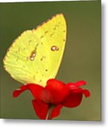Petals And Wings Metal Print