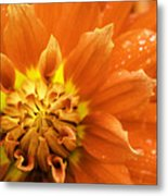 Petals Of Fire Metal Print by Rod Sterling