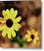 Petals Stretched Metal Print