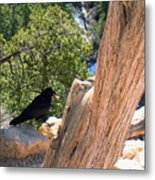 Petrified Raven At Grand Canyon Metal Print