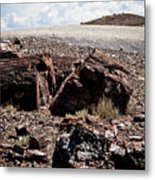 Petrified Wood #2 Metal Print
