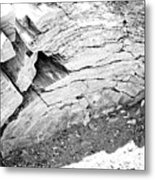 Petrified Wood #5 Metal Print