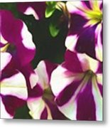 Petunias With A Flare Metal Print