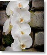 Phalaenopsis Brother White Windian Metal Print