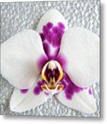 Phalaenopsis Yu Pin Panda  Metal Print