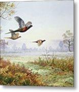 Pheasants In Flight  Metal Print