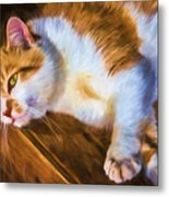 Philipsburg Manor - Barn Cat Nap Metal Print