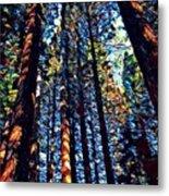 Phil's Trees Metal Print