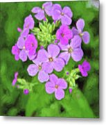 Phlox For You Metal Print