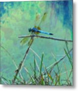 Photo Painted Dragonfly Metal Print