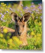 Photogenic Kangaroo Metal Print